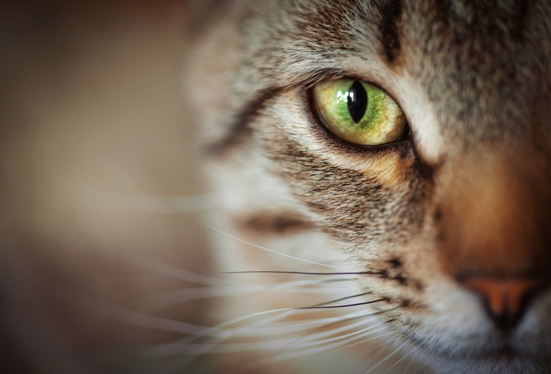 In Pursuit Of A Long And Happy Nine Lives: Why Cat Wellness Matters
