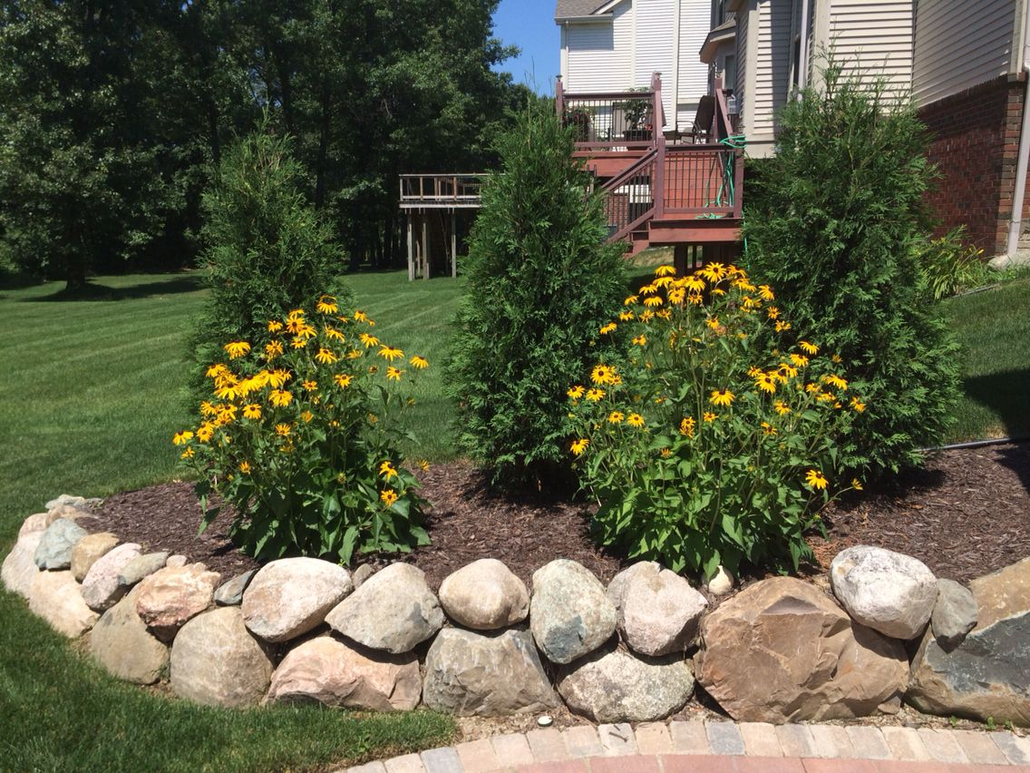 boulder retaining wall with black eyed susan u0026 39 s and techny arborvitae
