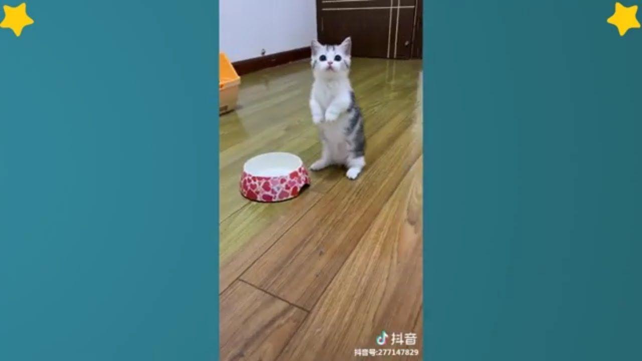Tiktok Cat Tik Tok Pet Tik Tok Animals Videos Compilation 9 Cats Kitten Tiktokcat Cutecats Animals Animal Gifs Cute Animal Videos