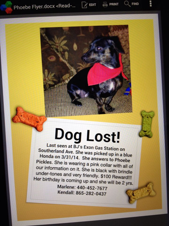 Our Precious Phoebe Pickles Was Stolen In Knoxville Tn Today Is
