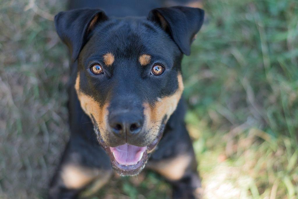 Daisy Foster dog, Dog cat, Animals