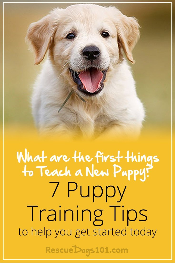 Your First Dog – Understanding Your Dog's Needs