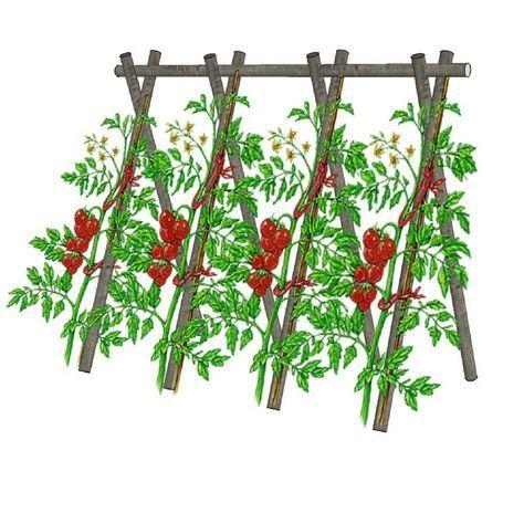 tuteurer les tomates exp jardins pinterest. Black Bedroom Furniture Sets. Home Design Ideas