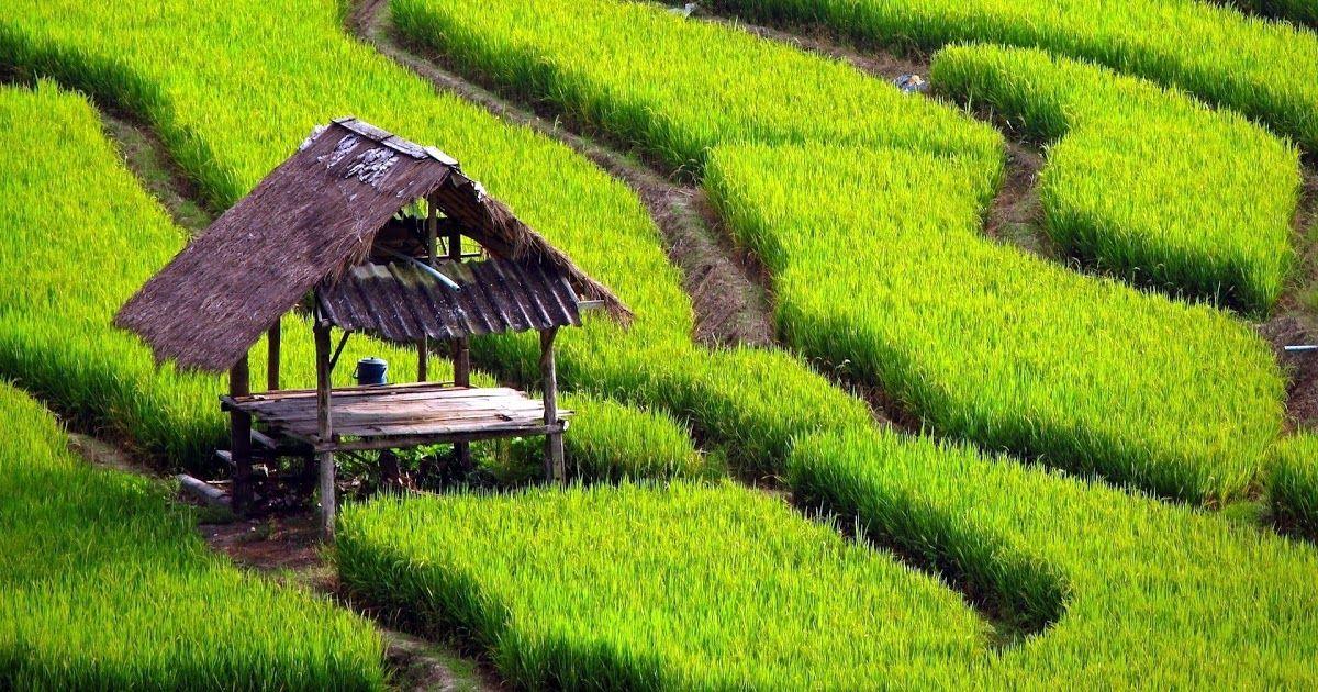Lirik Lagu Pileuleuyan Sunda Pemandangan Ekosistem Gambar