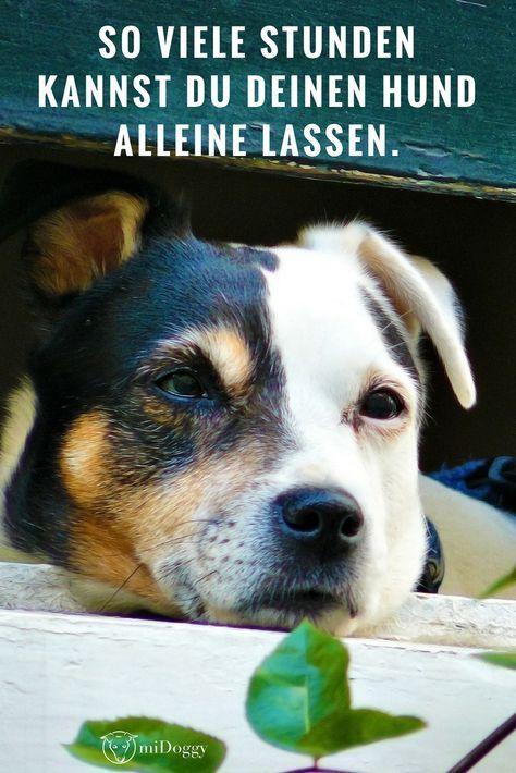 wie viele stunden kann man einen hund eigentlich allein lassen teil i dogs hunde hunde. Black Bedroom Furniture Sets. Home Design Ideas