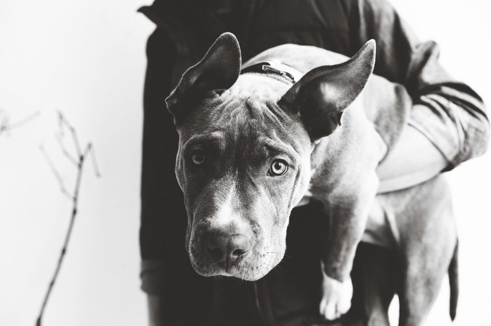 the dogs of The Urban Animal Scientist (excellent dog ...