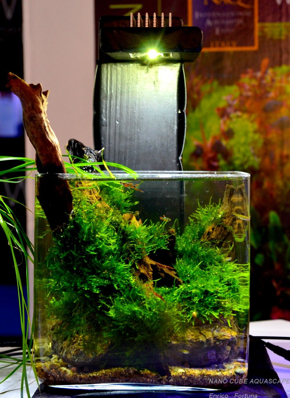 Nano cube aquascaping nature aquarium aquascaping by for Aquarium nano cube