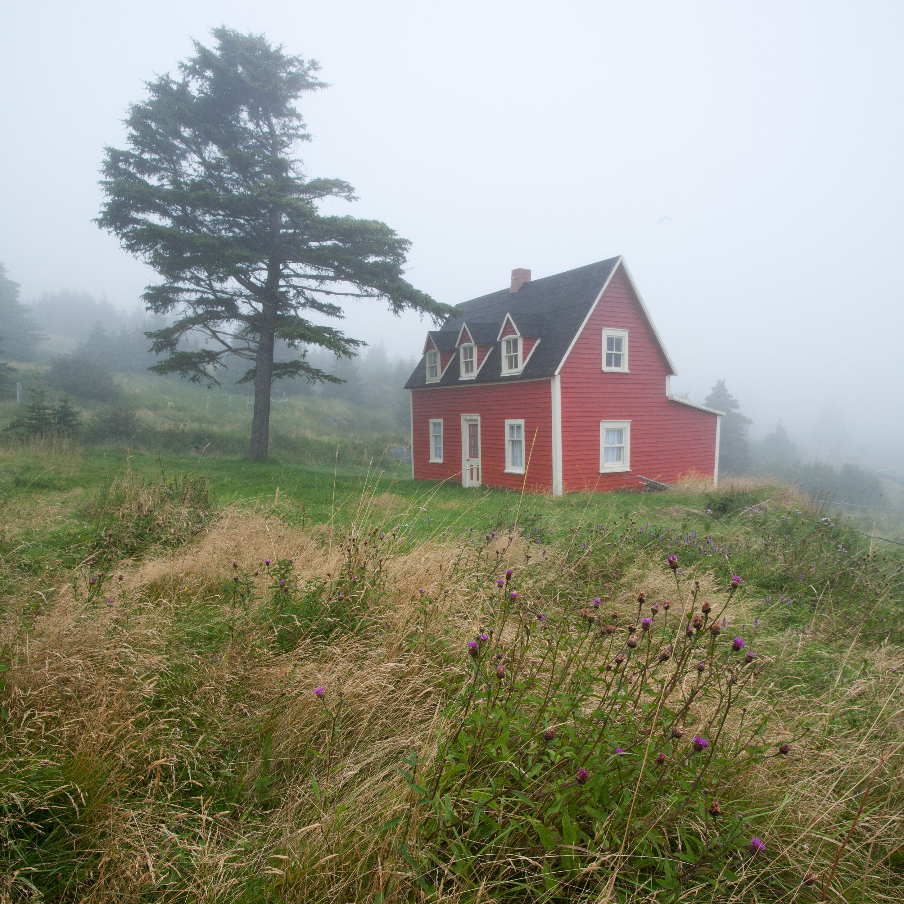 Red House In Tors Cove, Newfoundland