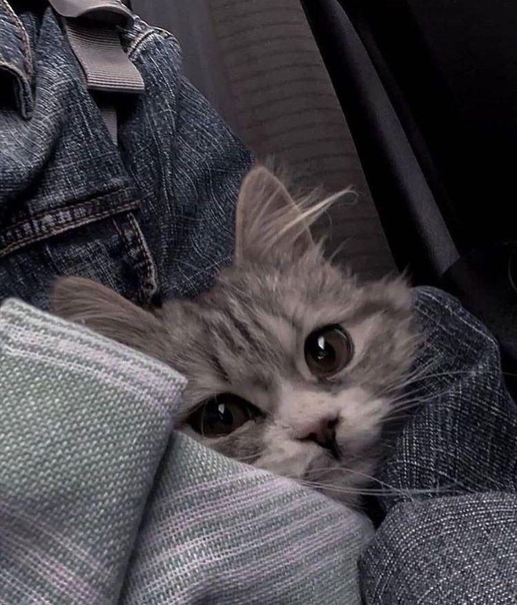 find me WOODY! ! ♥ ︎ - find me WOODY