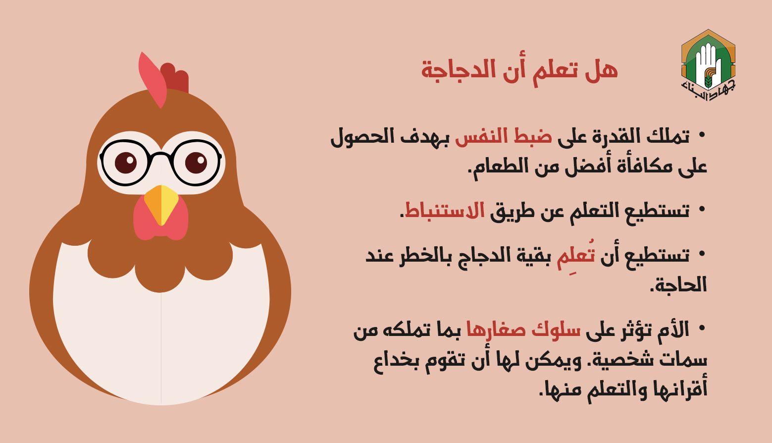 الدجاجة أذكى مما تتخيل Tree Farms Agriculture Coops