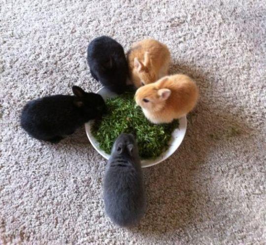 The Daily Bunnies #cutebabybunnies