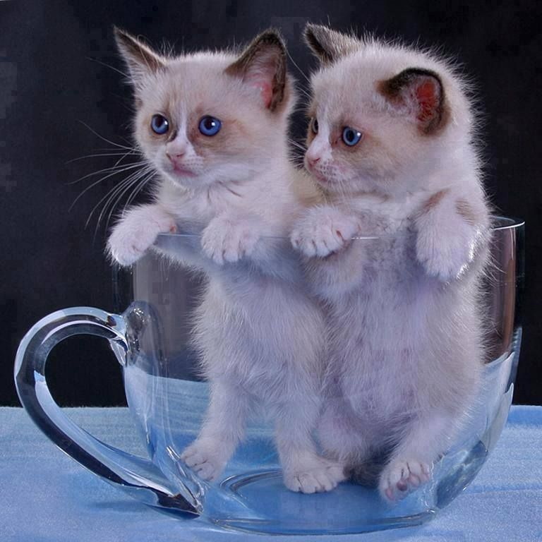 Картинки с добрым утром котятки прикольные