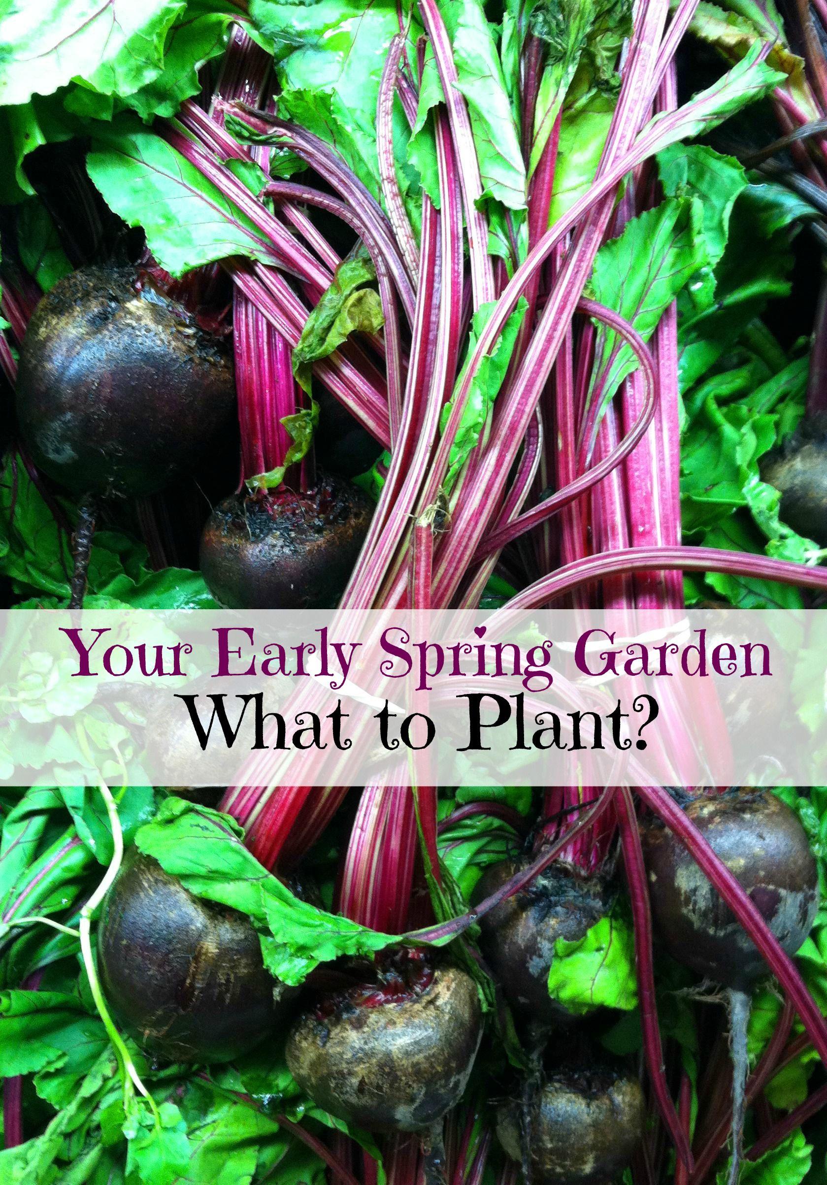 5 Plants for an Early Spring Garden Spring garden