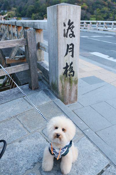 """IN KYOTO """"ARASHIYAMA"""""""