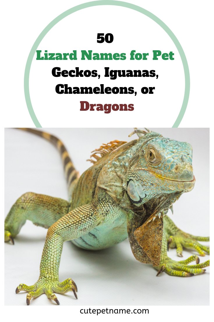 50 Lizard Names For Pet Geckos Iguanas Chameleons Or Dragons In 2020 Lizard Names Lizard Pet Names Unique