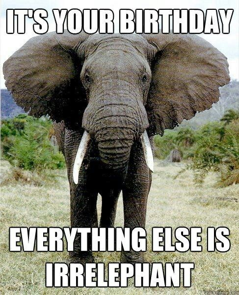 Pin By Eileen Granfors On E Greetings Elephant Birthday Happy Birthday Funny Happy Birthday Meme