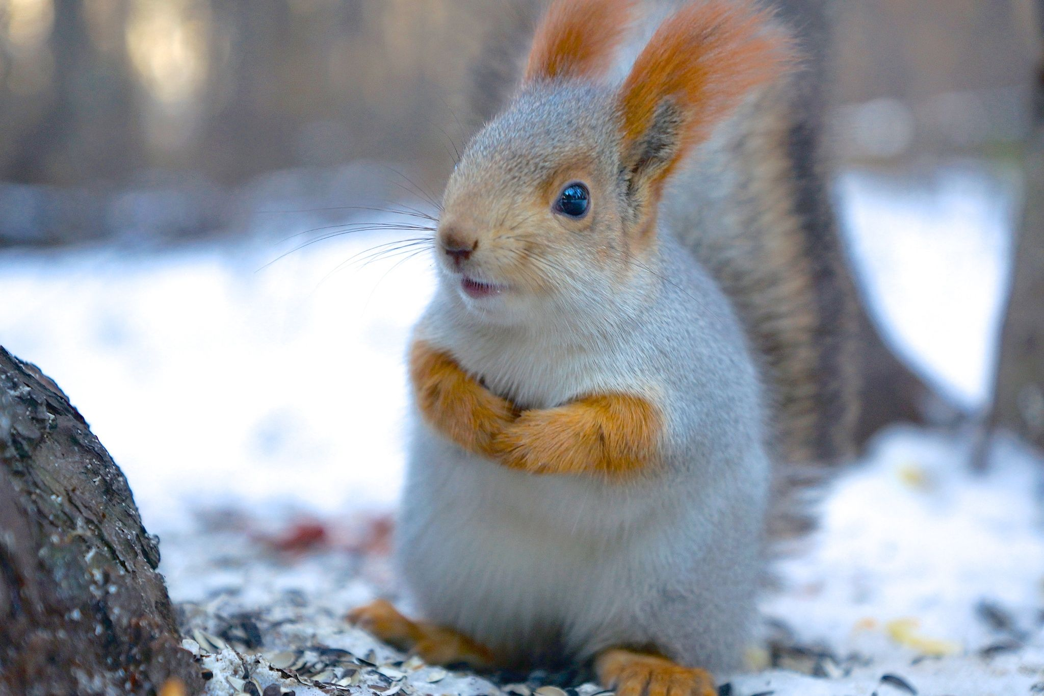 Photograph Squirrel by Anastasia Dolzhikova on 500px