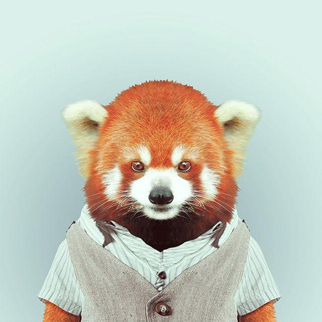 Fashion Zoo Fox Panda