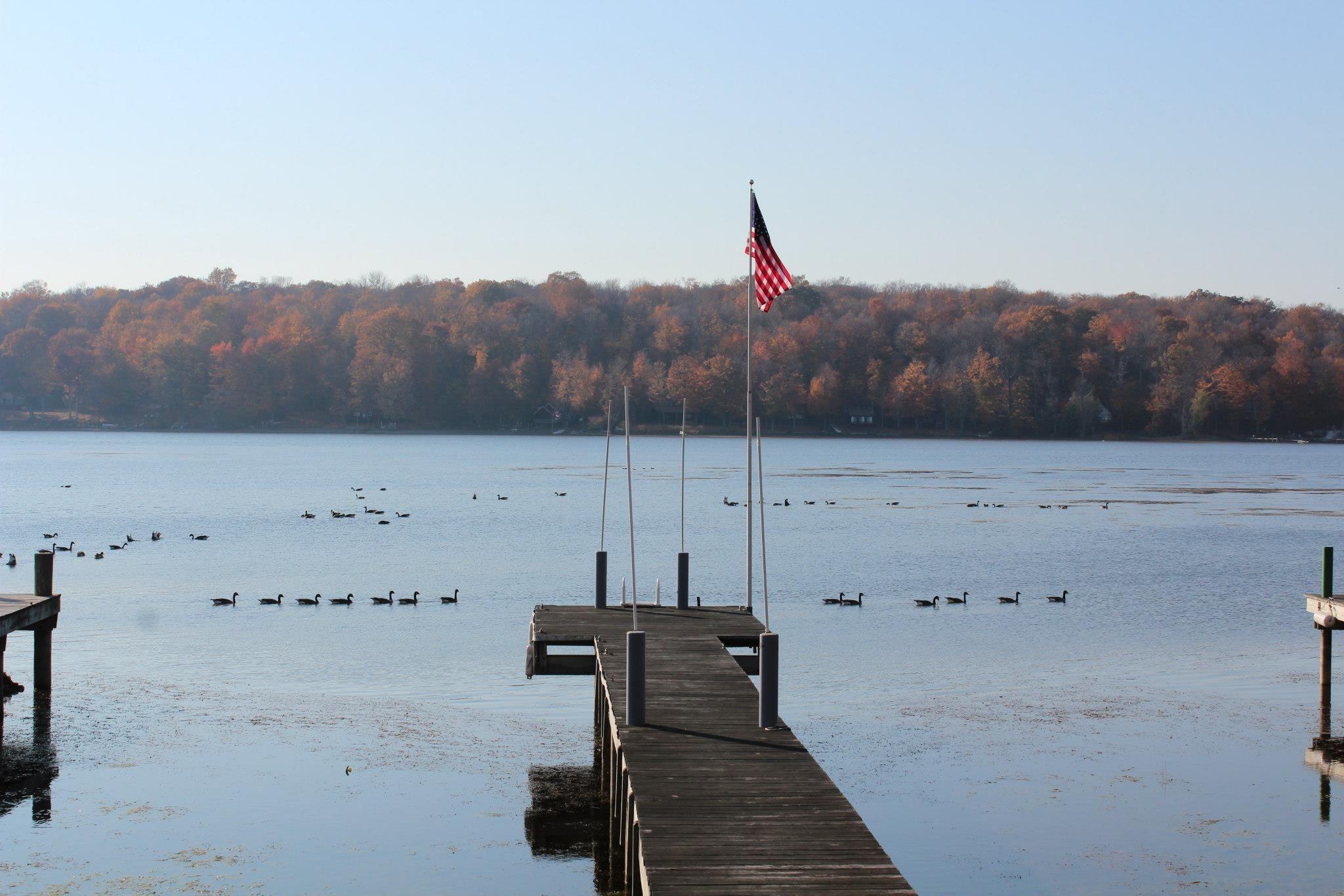 Canadian Geese. Sodus Bay, NY