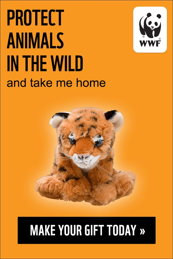 Protect Wildlife With A Symbolic Adoption Your Donation Helps Wwf