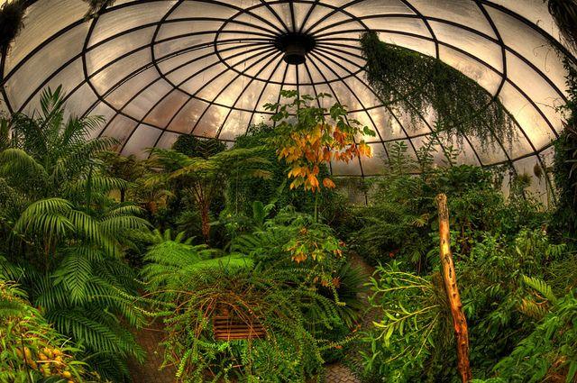 Subtropenhaus Greenhouse Dome Zurich Botanical Gardens Botanischer Garten Zurich Tropical Greenhouses Home Greenhouse Green House Design