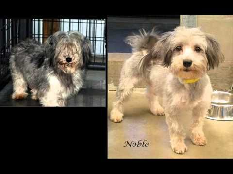 National Mill Dog Rescue Before After Photos Youtube Med