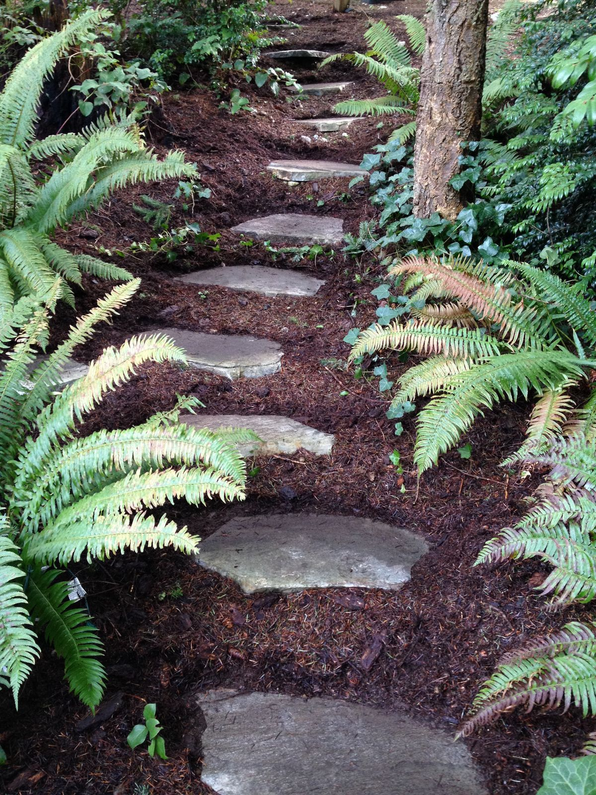 Pathway and ferns