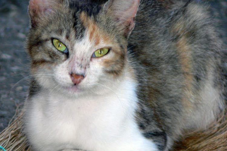 ¿Cuáles son las causas de las convulsiones en los gatos? | Muy Fitness