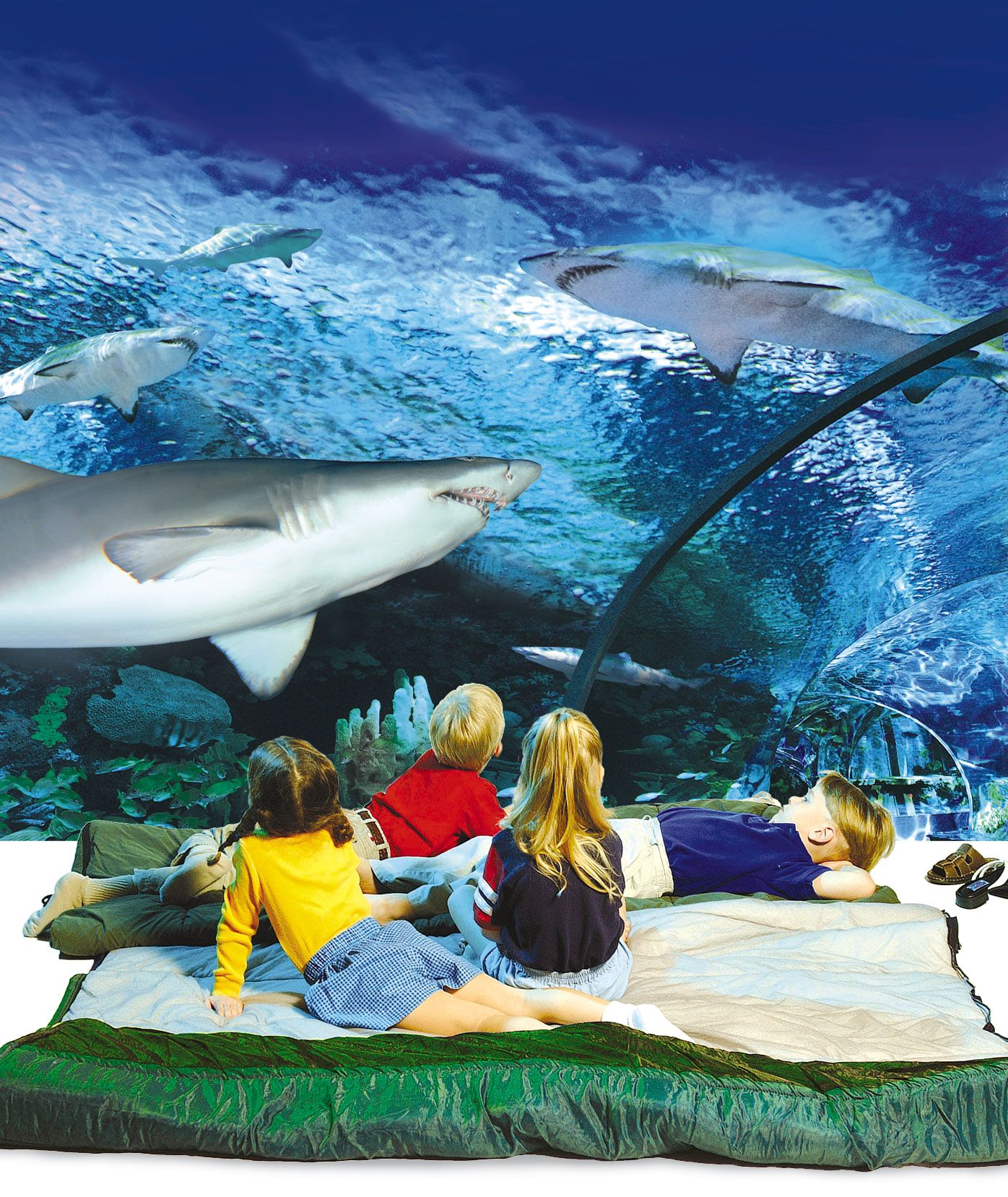 Sleep with the Sharks | Ripley's Aquarium Myrtle Beach ...