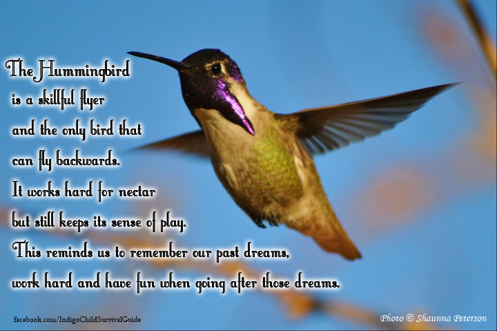 The Hummingbird Represents Tireless Joy As You Work Towards Your