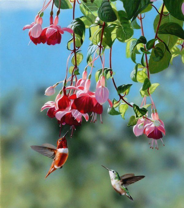Pin On Hummingbird Butterfly Gardening