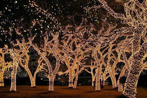 trees lights new york christmas holiday beautiful decoration