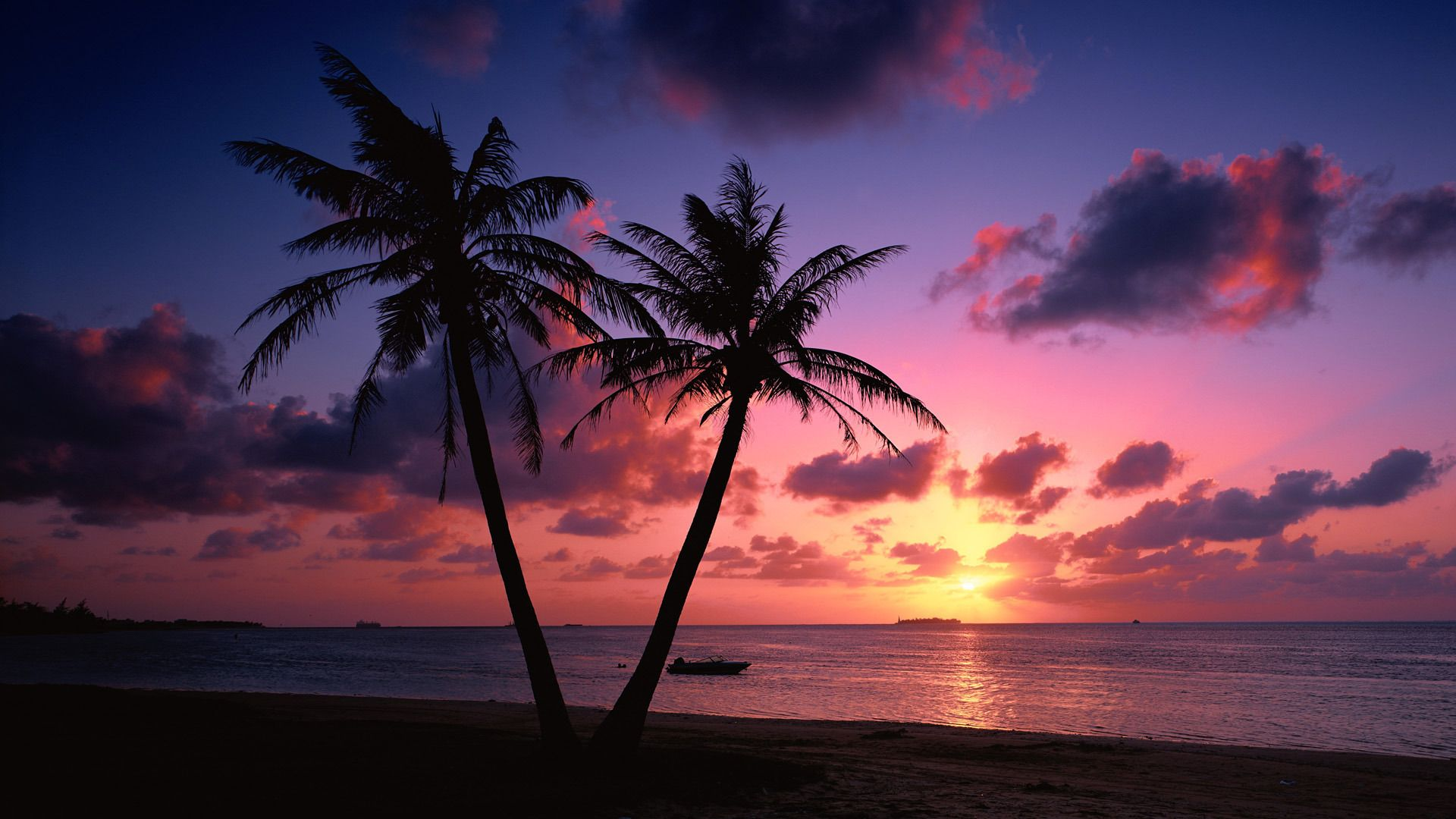 Sublime Coucher De Soleil Des Bahamas Fond D Ecran Palmier Paysage Colore Images Paysages