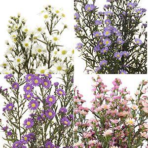 Fiftyflowers Com Aster Flowers Farm Mix Flowers Aster Flower Flower Farm