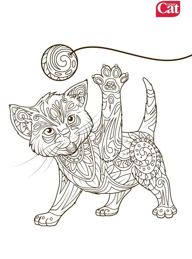 Your Cat Cat Colour Therapy Cat Craft Animal Coloring Pages Kittens Coloring Cat Colors