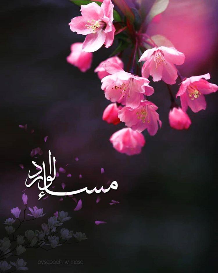 صبح و مساء Sur Instagram مساء الخيرات والمسرات مساء الورد تصميمي تصاميم السعودية صبح ومساء مسيتو Rose What Is Islam Flowers