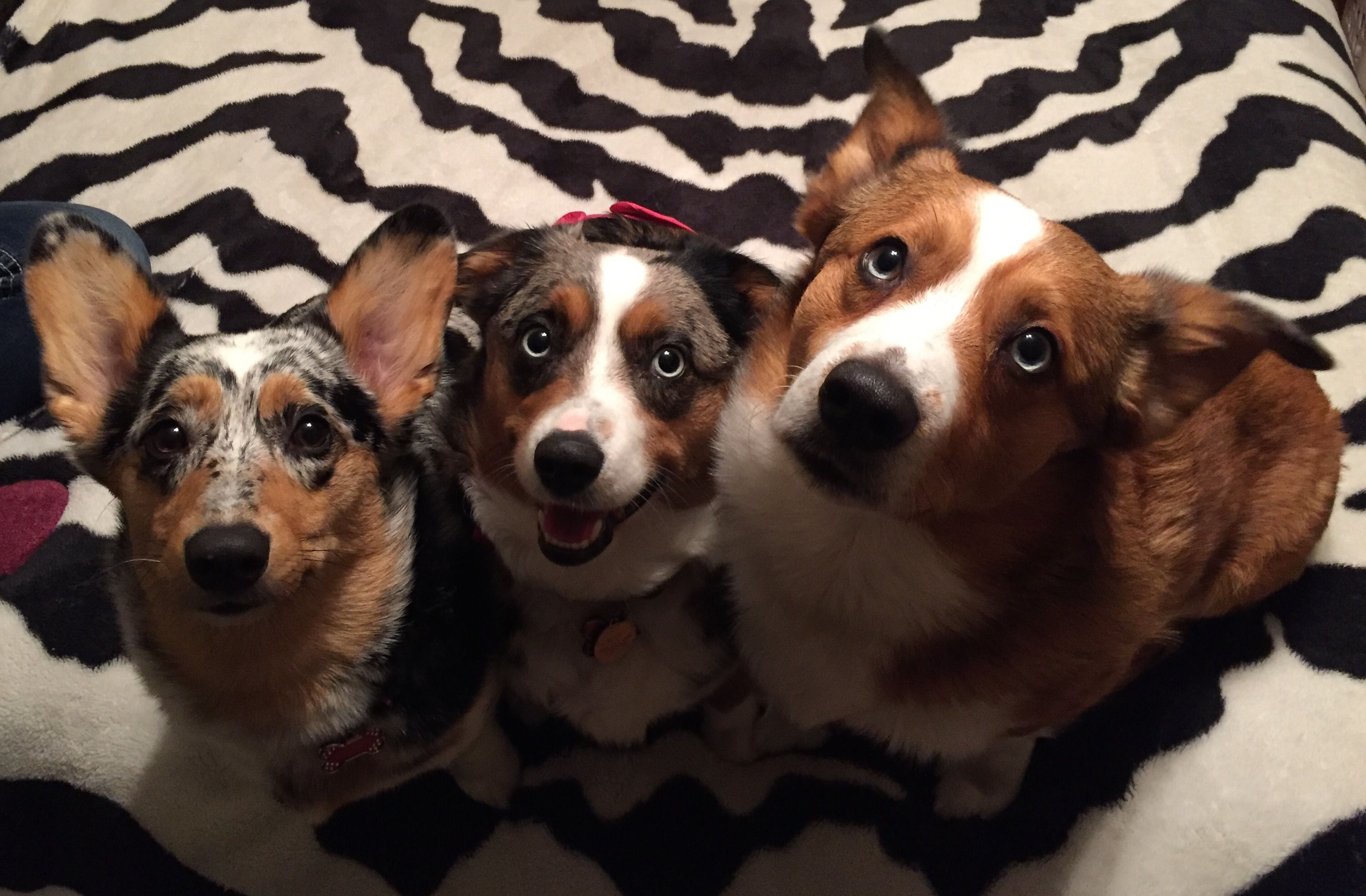 Pin by Staci Alpers on My Best dogs for