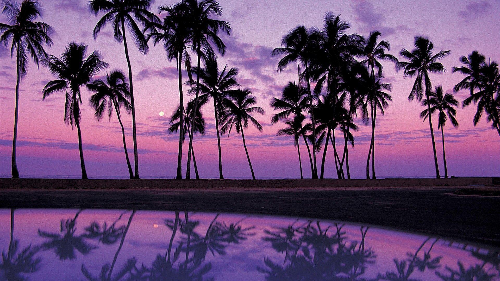 Palm Tree Backgrounds Wallpapers Backgrounds Images Art Photos Beach Sunset Wallpaper Sunset Wallpaper Purple Sunset