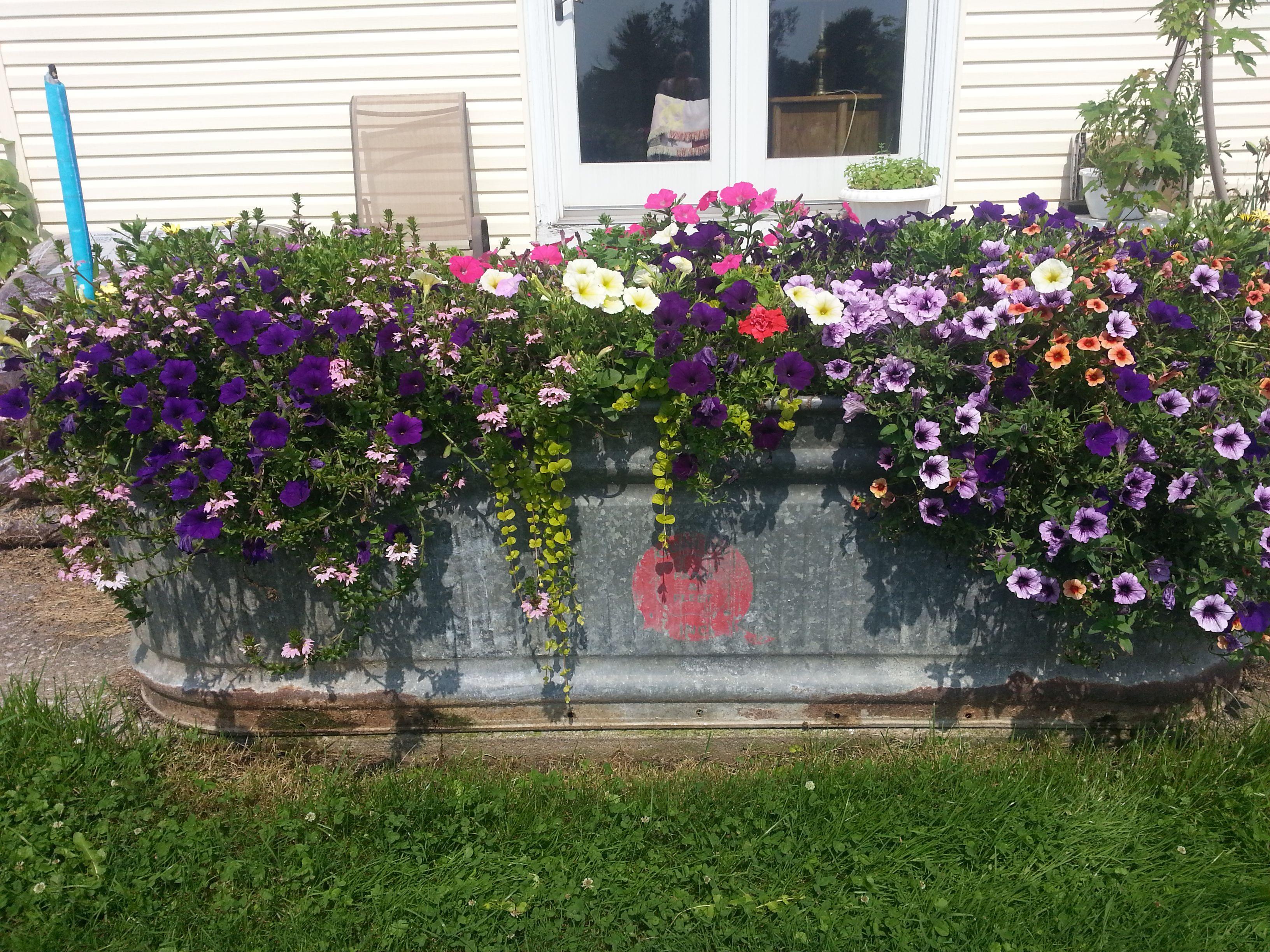 Create Your Own Water Garden! - Most Beautiful Gardens ...