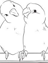 Parrotlets Coloring Page Bird Supplies Bird Coloring Pages Diy