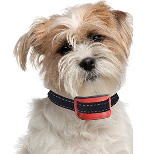 Bark Collar Small Dog Suitable For Small Terriers Sho Https Www Amazon Com Dp B011g50u66 Ref Cm Sw R Pi Dp X Training Collar Dogs Dog Training Collar