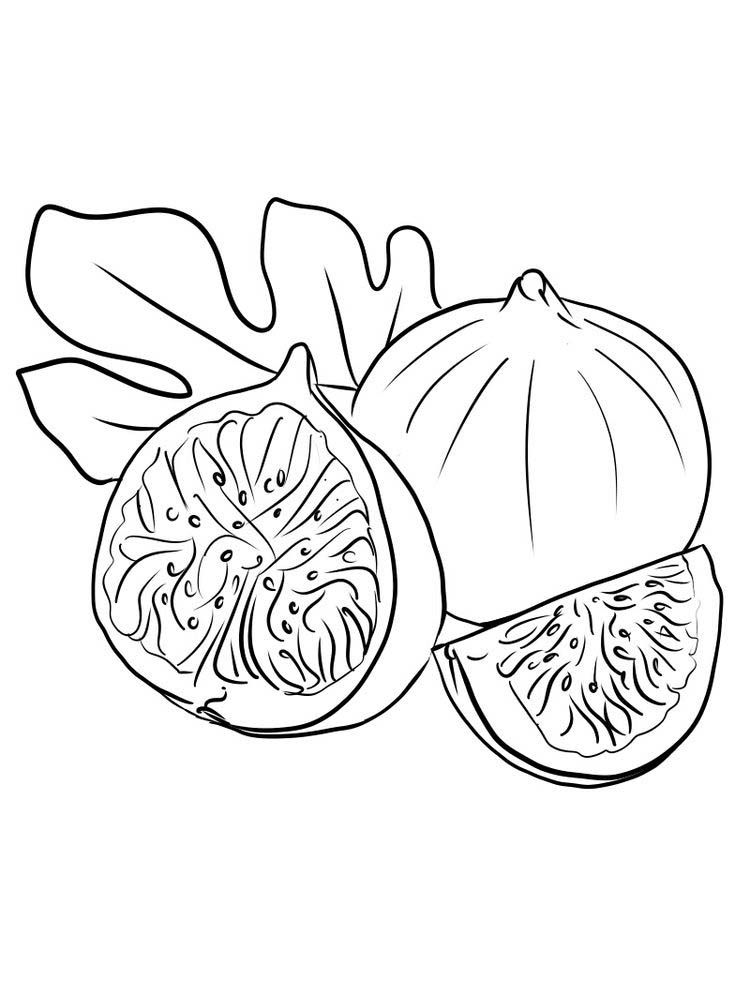 Fig Fruit Coloring Pictures Print