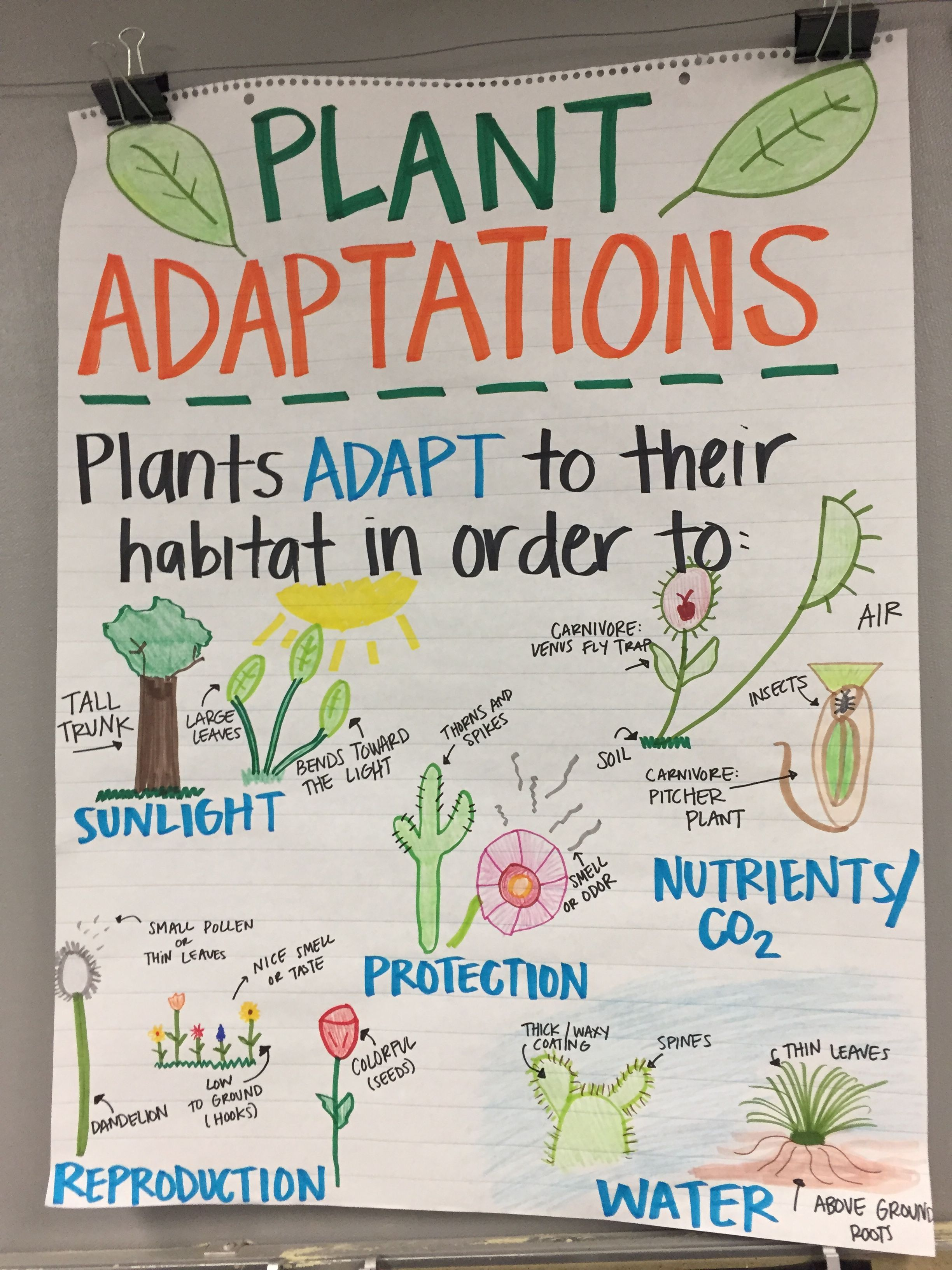 Plant Adaptations Anchor Chart