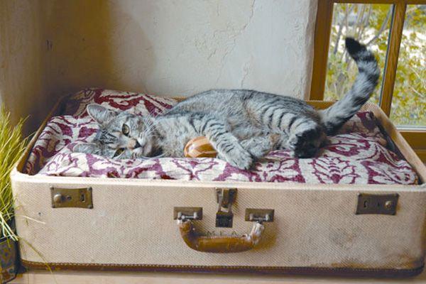 Vintage Style #pets #cat