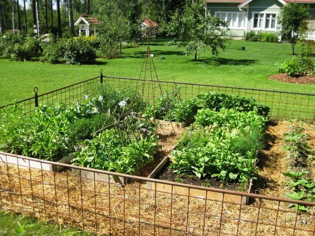 Kasvimaalle Kaunis Ja Kaytannollinen Aita Kitchen Garden Garden Vegetable Garden