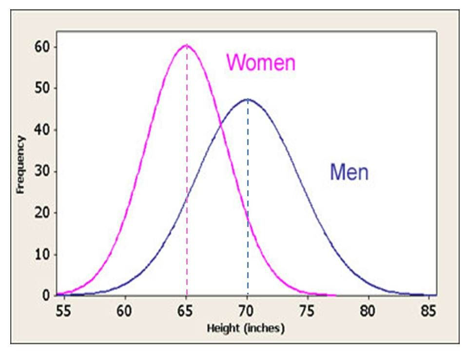 Average height for a adult female