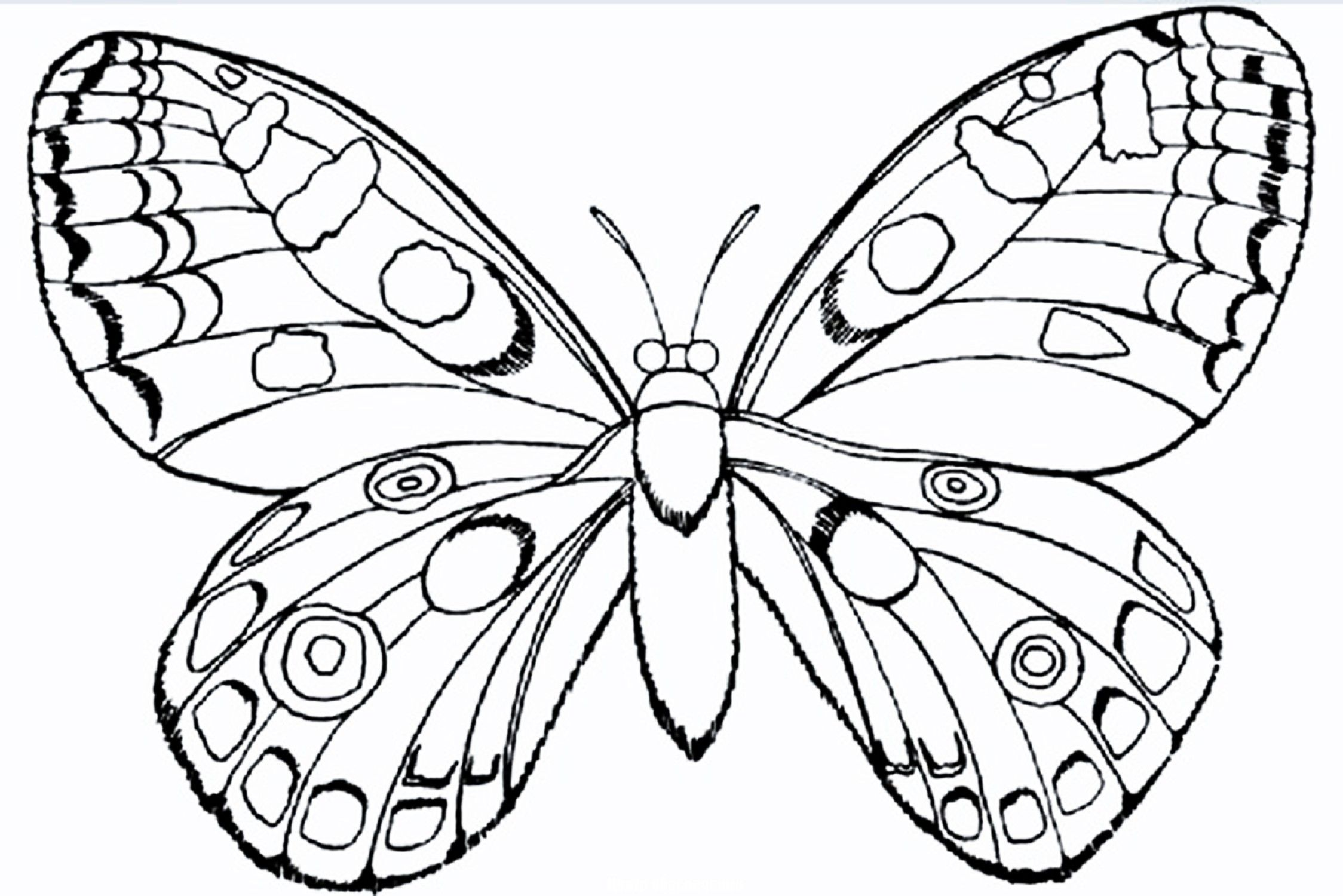 Bff Color Pages To Color Google Search Insect Coloring Pages Bug Coloring Pages Flower Coloring Pages