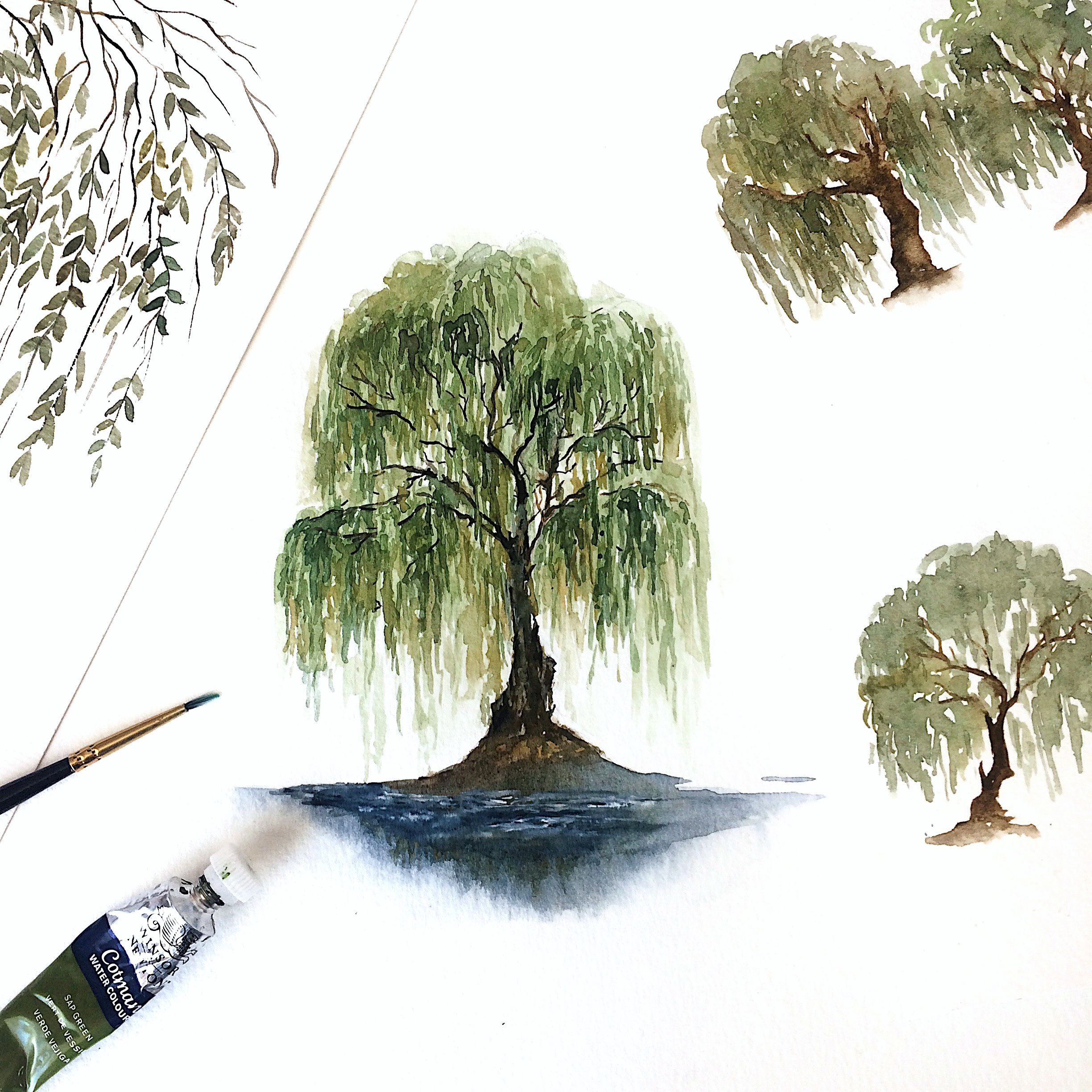 Willow Tree Watercolor Painting Watercolor Art Artist Artwork
