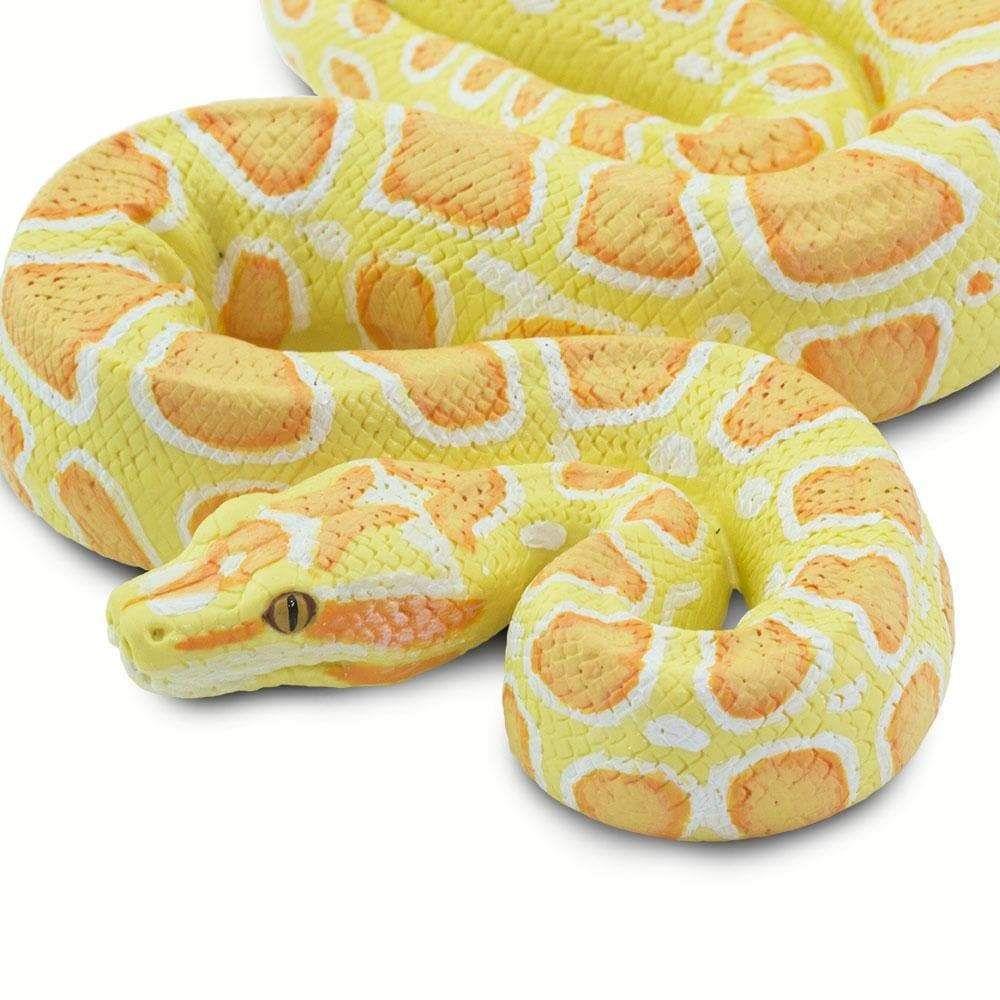Albino Burmese Python Burmese Python Animal Figures Snake