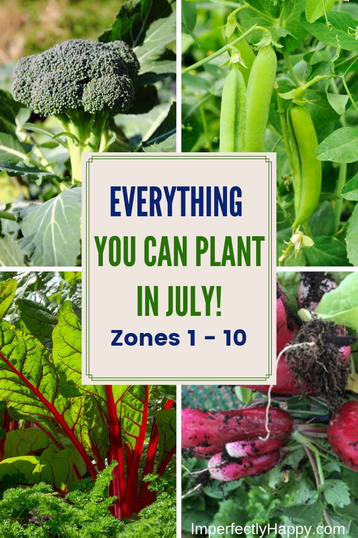 What To Plant In July In Your Vegetable Garden Plants Veg